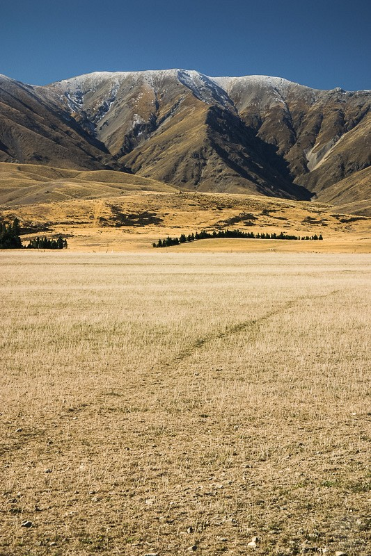 Otago golden plains
