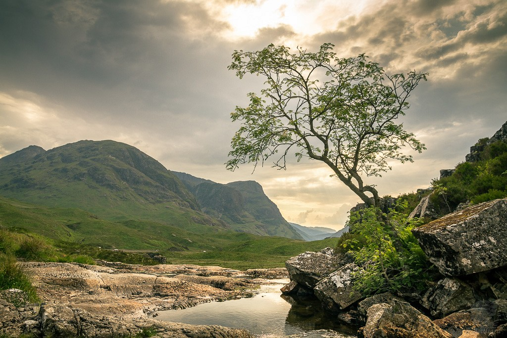 Glencoe Tree